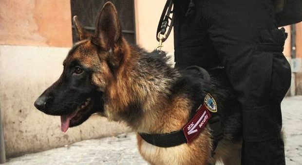 Cani da Protezione Fenalc